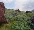 Zielone wzgórza wokół Iqaliku
